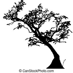 Bonsai is the art of aesthetic miniaturization of trees, or ...