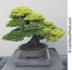 Bonsai miniature juniper - Bonsai and Penjing landscape with...