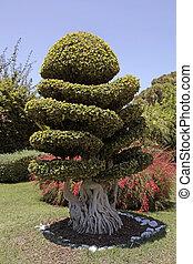 bonsai, natural, árvore, jardim
