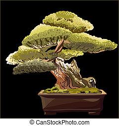 bonsai, noir, vecteur, arbre, fond