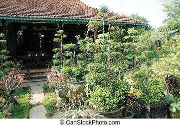 Bonsai nursery Vietnam
