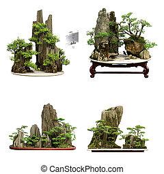 bonsai, odizolowany, zbiór, porcelana, tło, biały, najlepszy