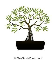 bonsai, oliva, albero.
