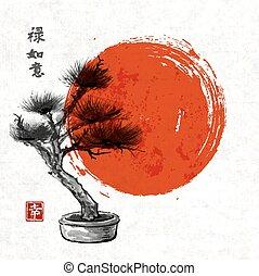 Bonsai pine tree hand drawn with ink