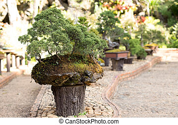 Bonsai pine tree against in the garden