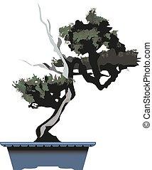 Bonsai pine tree Vector illustration.