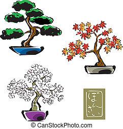 Bonsai / pinetree, japanese maple, sakura