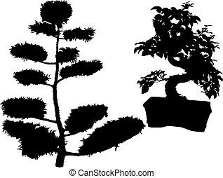 bonsai, planta borracha, conif, árvores