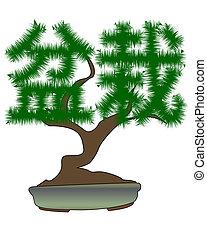 bonsai träd, japansk, bilda, hieroglyfer