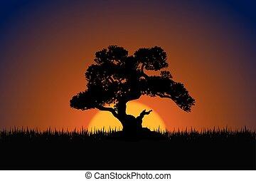 bonsai træ, silhuet