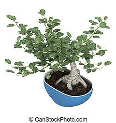 Bonsai tree in a pot