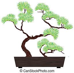 bonsai tree pine - bonsai green tree pine in dark wooden box