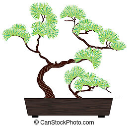 bonsai tree pine - bonsai green tree pine in dark wooden box