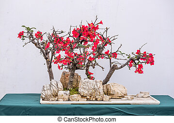 Bonsai tree with pink flowers against white wall