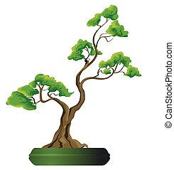 bonsai, vektor, träd, illustration