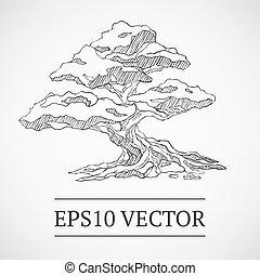 bonsai, vendimia, árbol, sketched