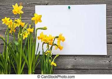 boodschap, en, lente, daffodils