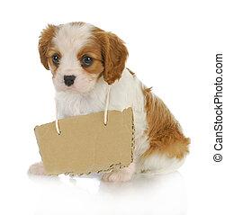 boodschap, puppy