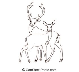 book:, coppia, coloritura, isolato, deers