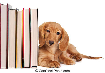 book end puppy - Book end puppy