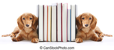 Book end puppy - Book end puppies isolated on white.