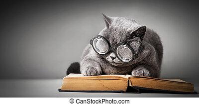 book., grand chat, rigolote, verres lecture