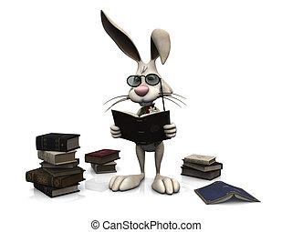 book., lesende , karikatur, kanninchen