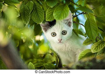 boom., jonge, kat