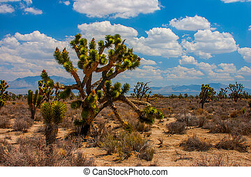 boom joshua, in, mohave, woestijn, nevada