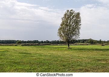 boom landschap