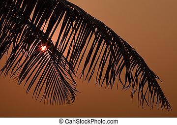 boom., palm