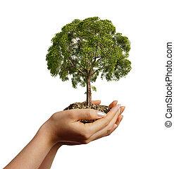 boom., terrein, van een vrouw, holdingshanden