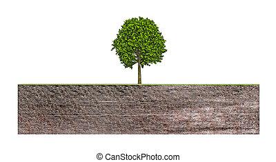 boompje, bankstel, grond