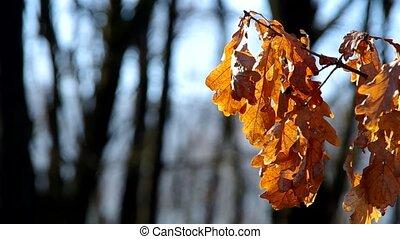 boompje, bladeren, in, de, winter