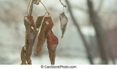 boompje, bladeren, in, winter