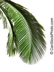 boompje, bladeren, palm