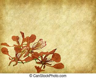 boompje, bloemen, antieke , papier, oud, achtergrond, pauw, ouderwetse