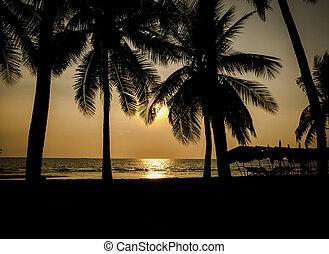 boompje, cocosnoot, strand, silhouette