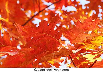 boompje, gebladerte, op, herfst