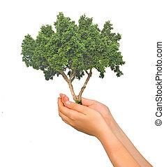 boompje, handen