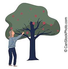 boompje, herfst, appeltjes , bijeenkomst, seizoen, oogst, ...