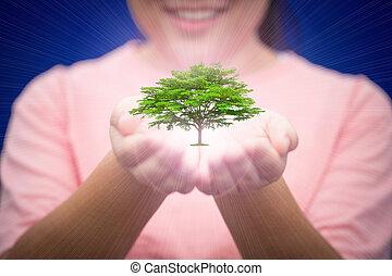 boompje, in, vrouw, hand, helpen, om te beschermen, natuur, en, ecologie, reservatie, voor, toekomst, menselijk leven