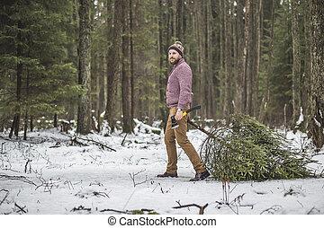 boompje, jonge, hout, caryying, kerstmis, man