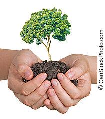 boompje, muntjes, groeiende, stapel