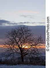 boompje, ondergaande zon