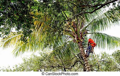 boompje, tremmer, op, een, palmboom