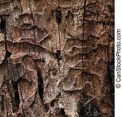 boompje, vervallen, textuur, romp
