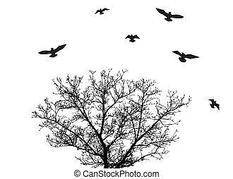 boompje, vogels