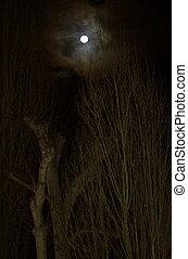 boompje, volle, bovenkanten, boven, maan