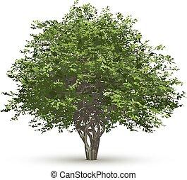boompje, vrijstaand, achtergrond., vector, groen wit